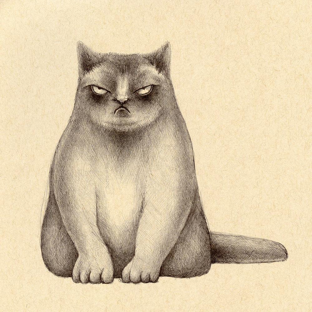 meancat.jpg