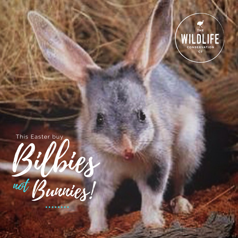 Bilbies not bunnies this easter