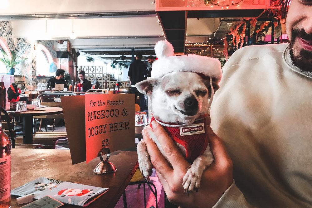 Near & Far London - Club Puppicana Chihuahuatruth preset test.jpg