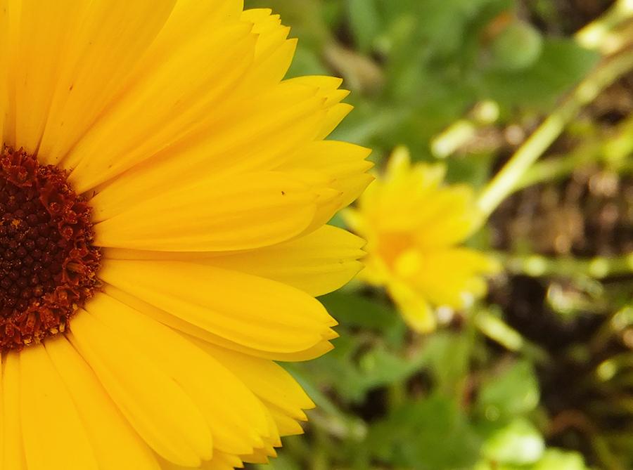 Half-Sunflower.jpg