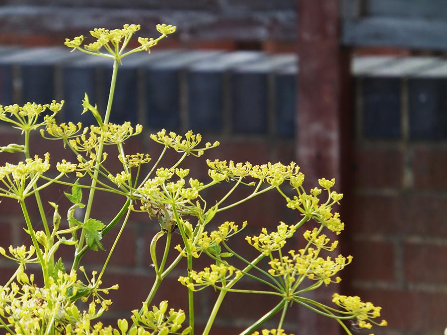Yellow-wild-flowers.jpg
