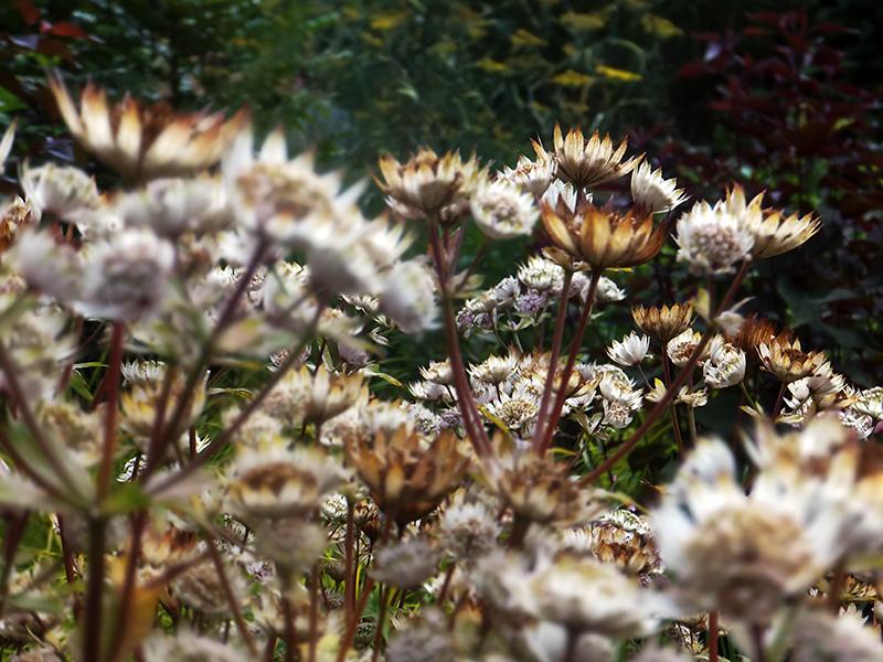 Autumn-flower-beds-jmpblog.jpg