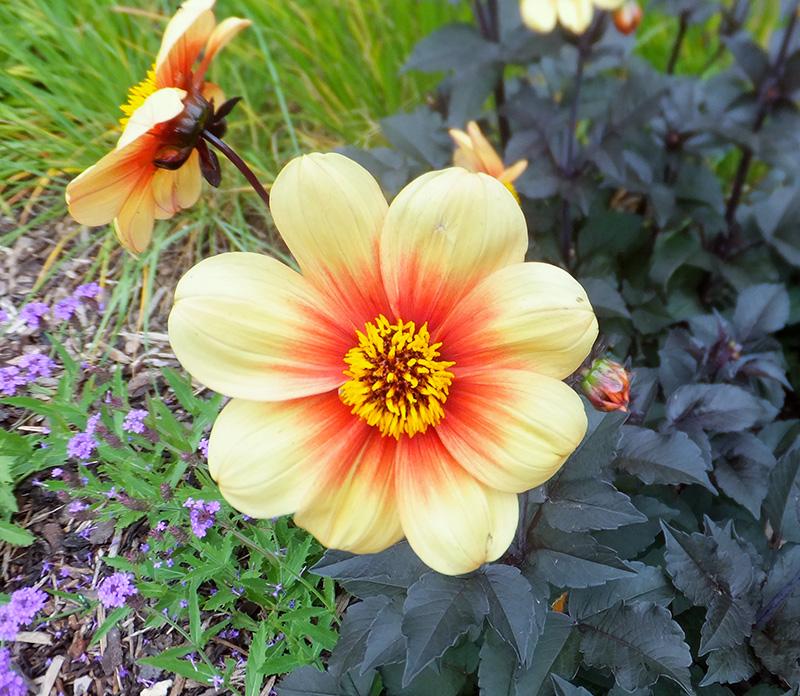 orange-flower-jmp-blog.jpg