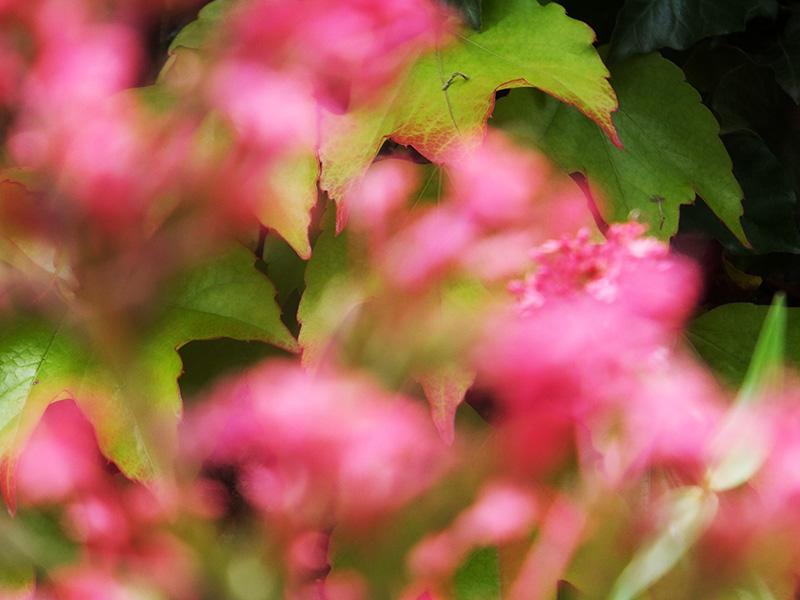 Blury-pink-flowers-amberly-jmp-blog.jpg