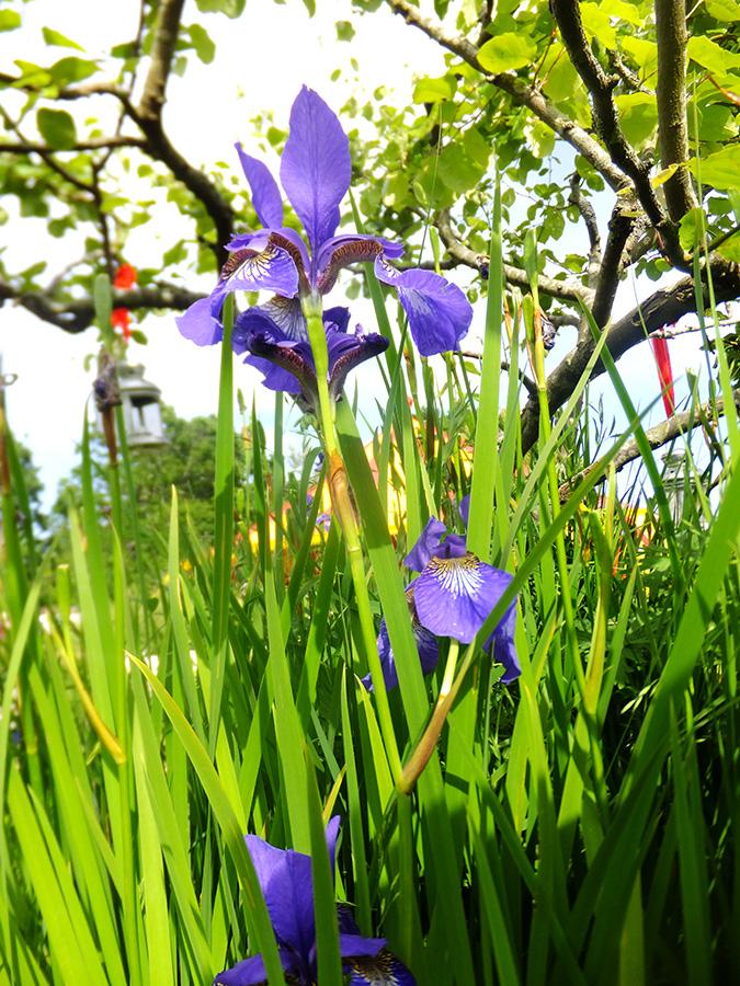 Flower-standing-tall-amberly-jmpblog.jpg