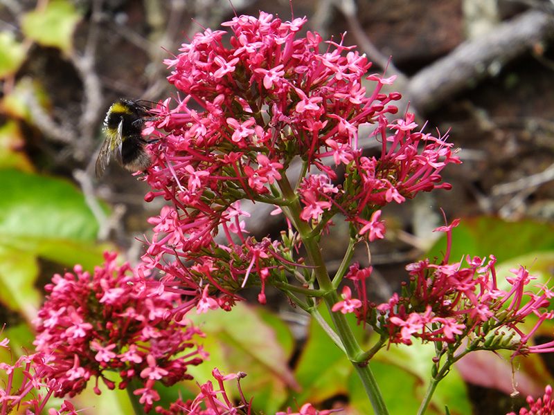 Pink-flower-and-bee-amberly-jmp-blog2.jpg