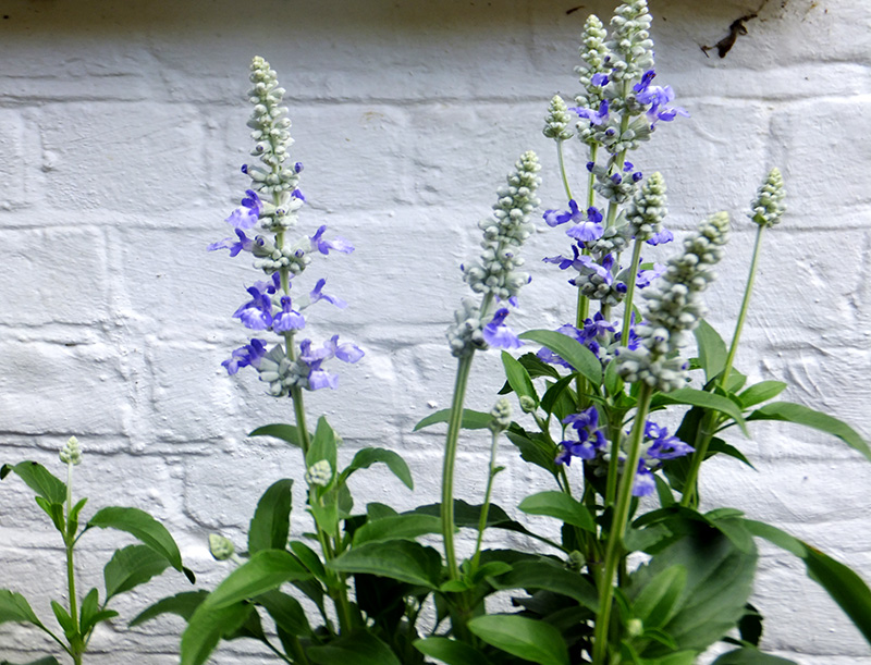 Purple-Flowers-Amberly1.jpg