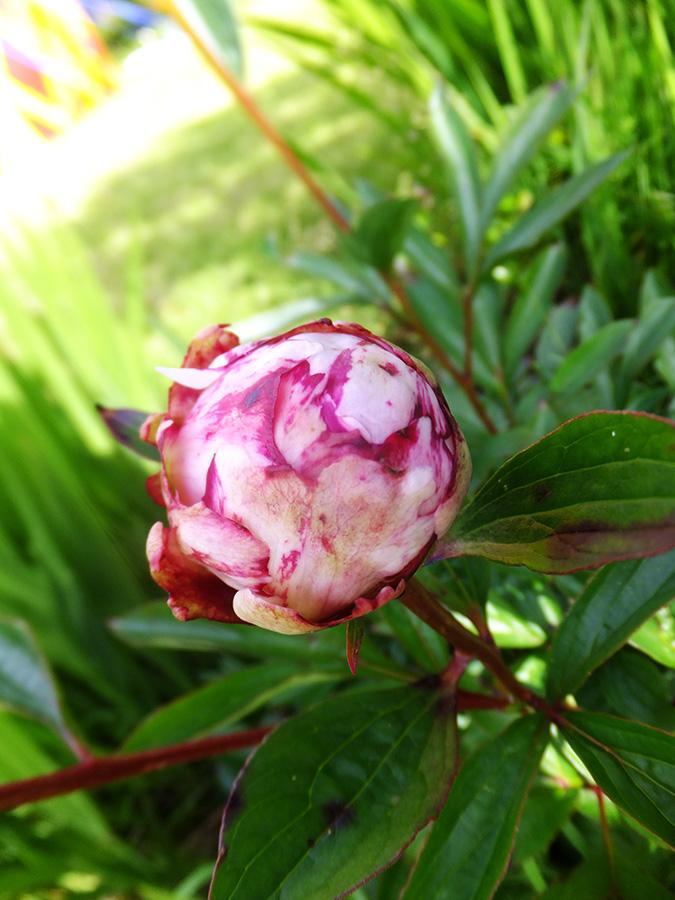 Rosebud-amberly-JMP-Blog1.jpg