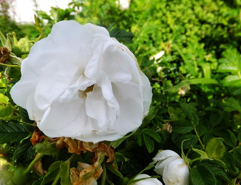 White-flower-amberly-jmp-blog.jpg