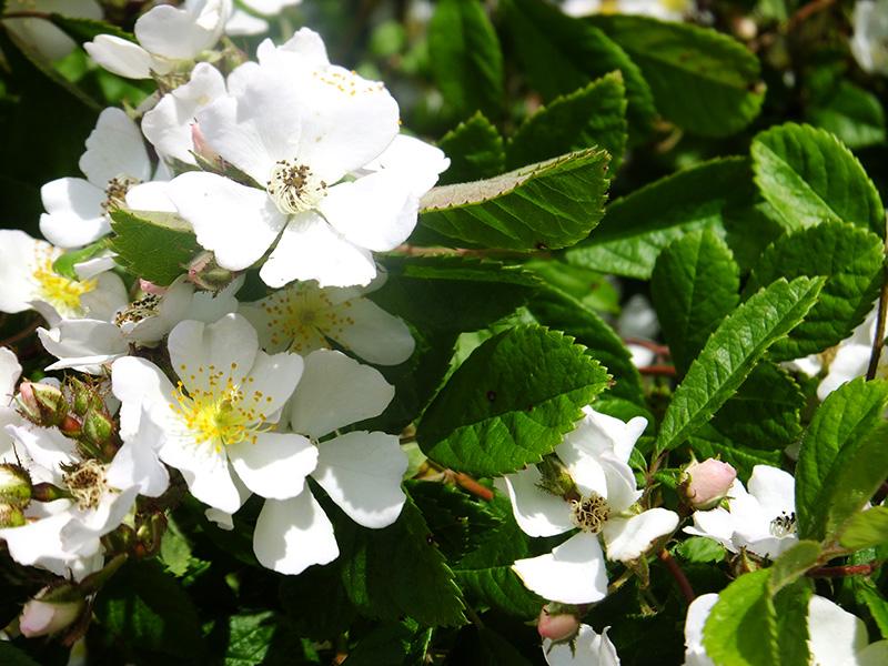 White-flowers-Amberly-JMP-Blog.jpg