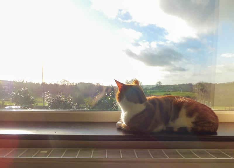 Gordon-windowsill-2015.jpg