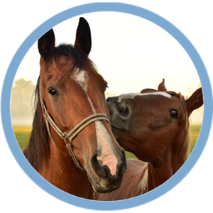 equine-wellness 300x300.jpg