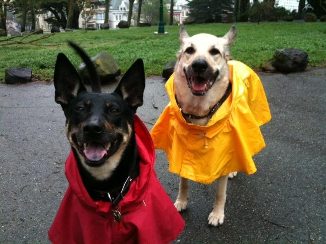 A rainy day at Alamo Square Park