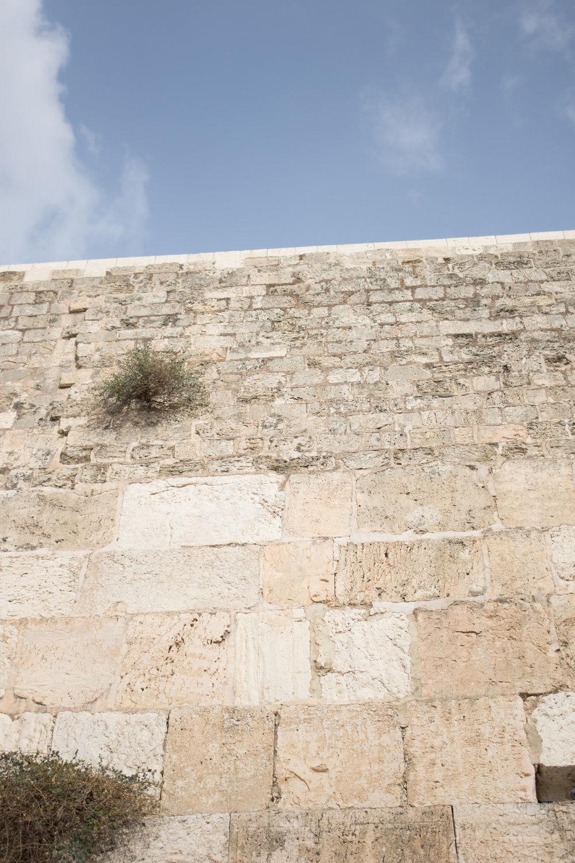 Israel (1 of 1).jpg