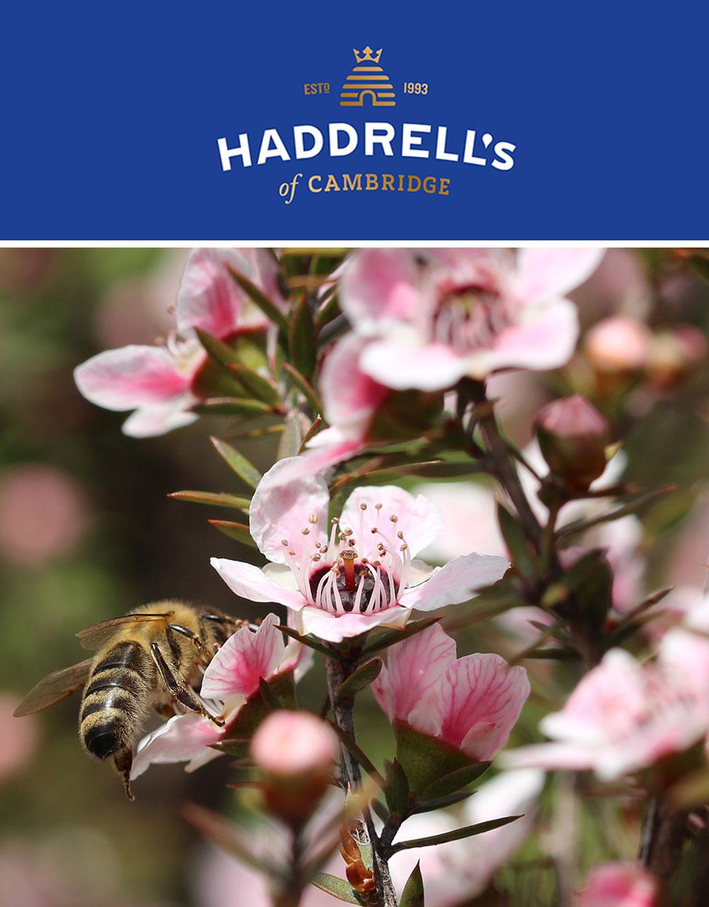 Haddrells-Hero-New.jpg