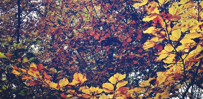 autumn-fall-foliage-color-yellow-leaves.jpg