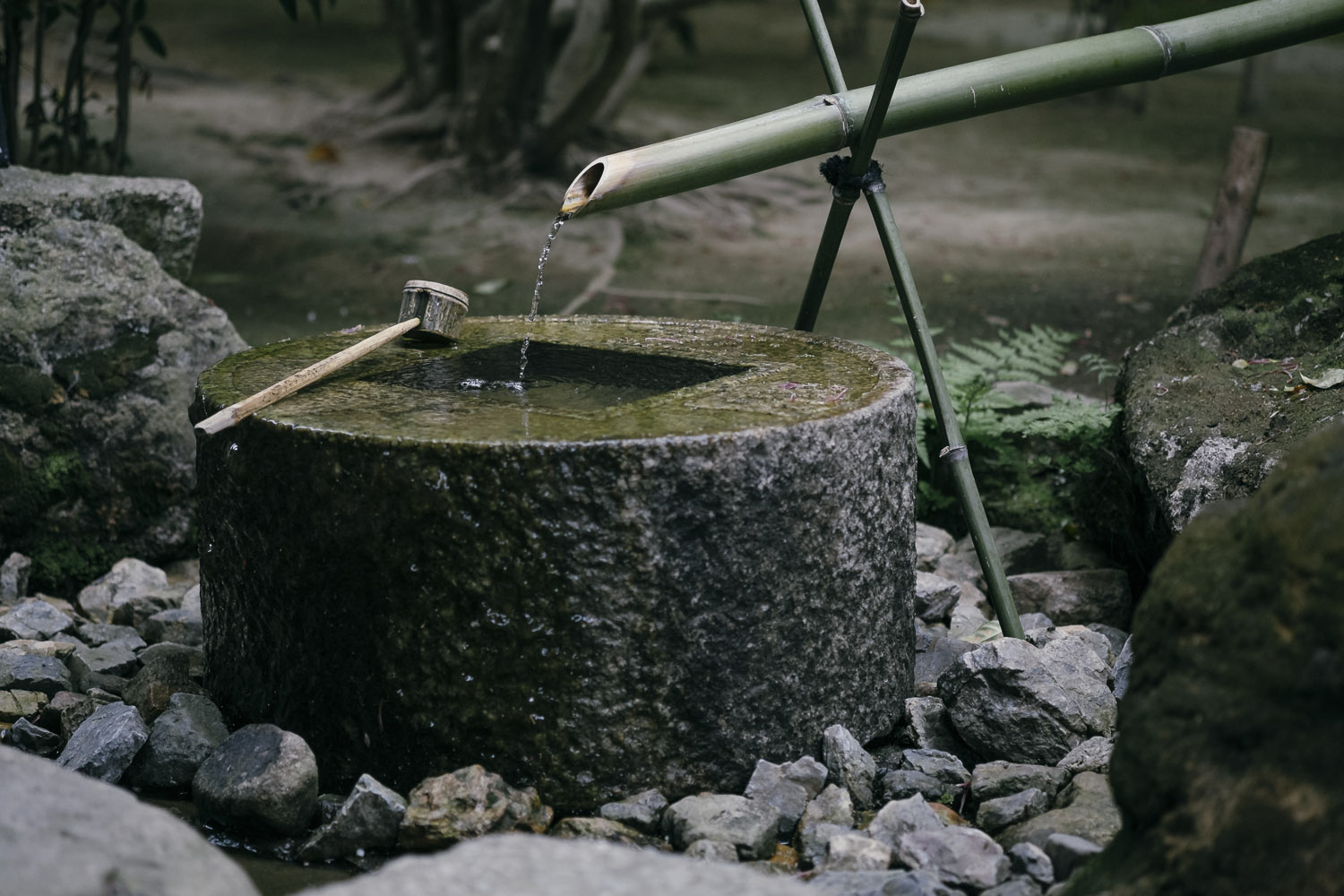 Tsukubai, a basin provided for ritual washing of the hands and mouth.