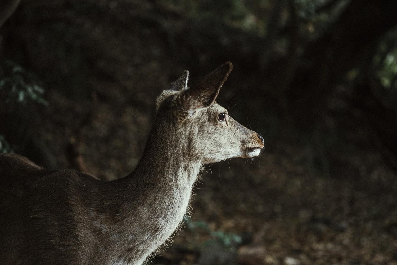 Like a deer caught in head lights, Miyajima.