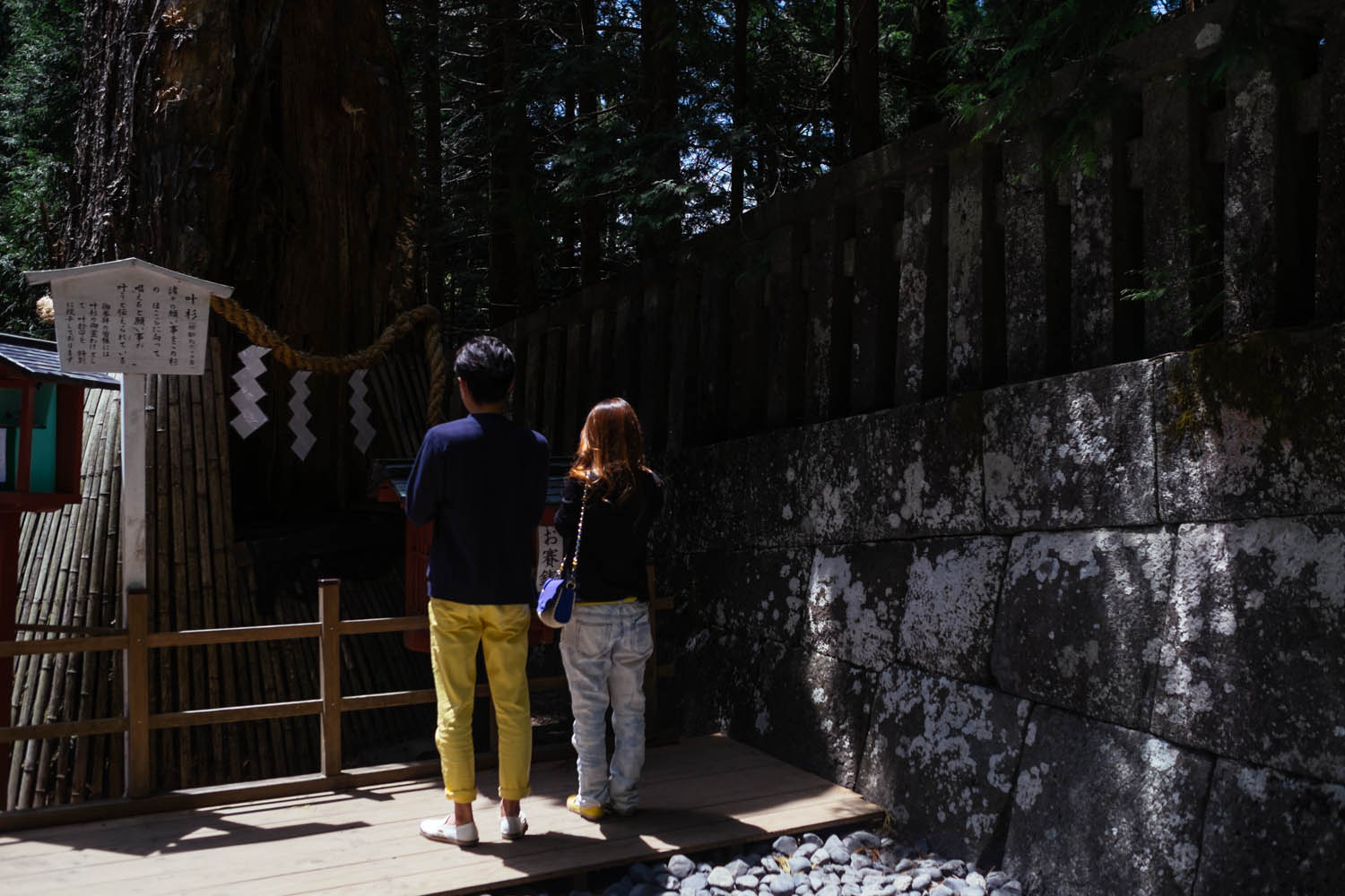 Young couple praying to a hole in an old tree, Nikko.