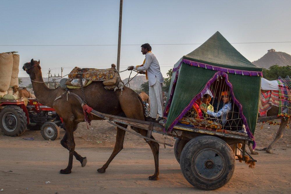 Camel Riding -