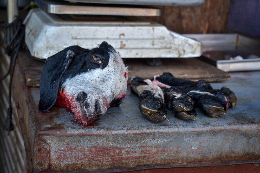 Meat Industry -