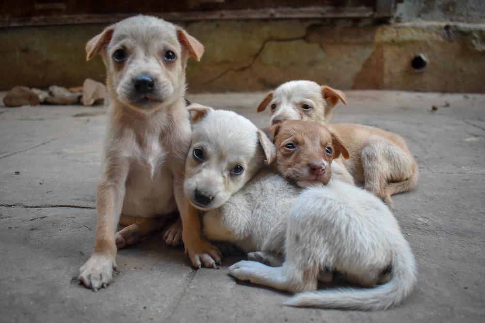 Street Animals -