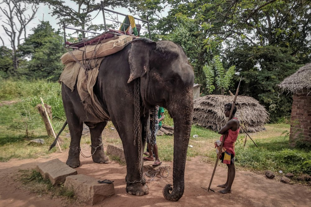 Elephant Riding, Sri Lanka - After witnessing elephants forced to carry tourists along busy roads day-after-day, we worked with PETA to expose Sri Lanka's horrifying and heartbreaking elephant riding industry.Read more