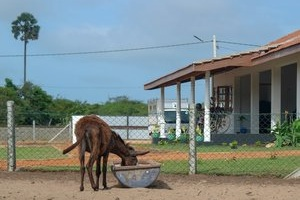 Donkey Clinic & Education Centre, Sri Lanka - In Mannar, Sri Lanka, over 1,000 feral donkeys struggle to survive on the streets. Life Changing Videos and Challenge 22+ published our story about Sri Lanka's first ever donkey clinic.Read more