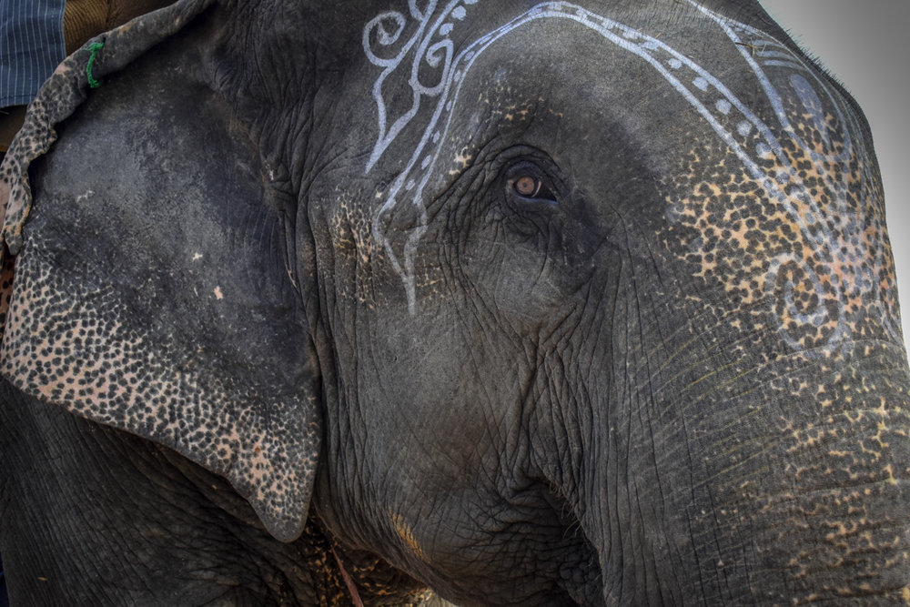 Working with Travel Companies - With our work readily available to use for anyone trying to raise awareness of animal rights, we show how one ethical travel agency reached out to use our footage to warn tourists about elephant riding.Read more