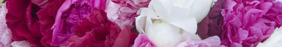 Fleurscoupeesbande_977.jpg