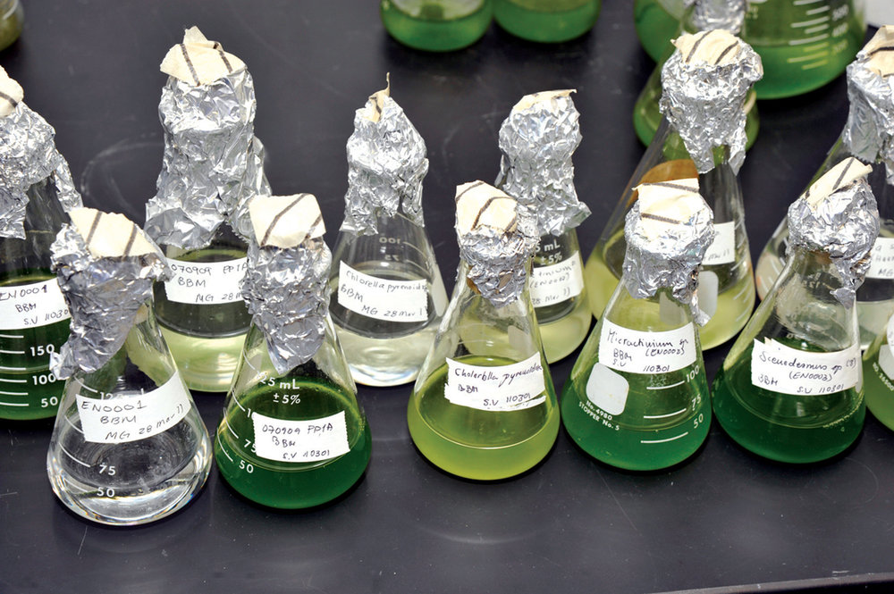 Research on next-gen or advanced biofuels