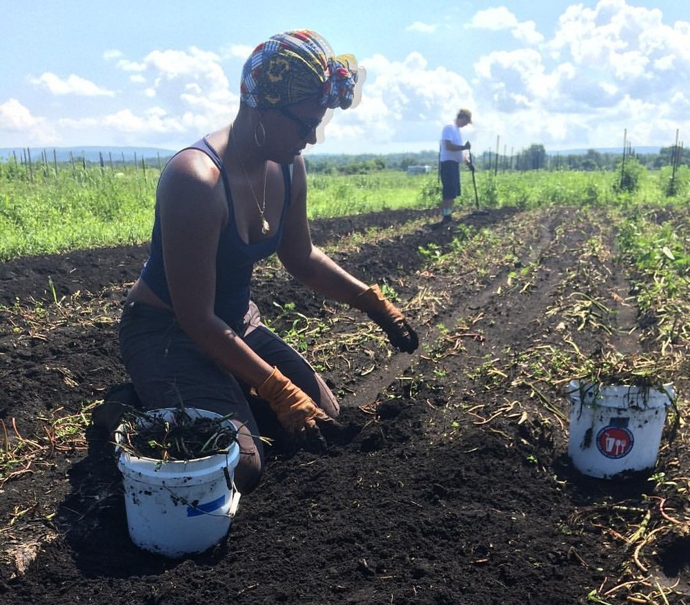 Volunteer Day @  Rise & Root Farm  - Picking weeds and enjoying the sun and fresh air on my skin.
