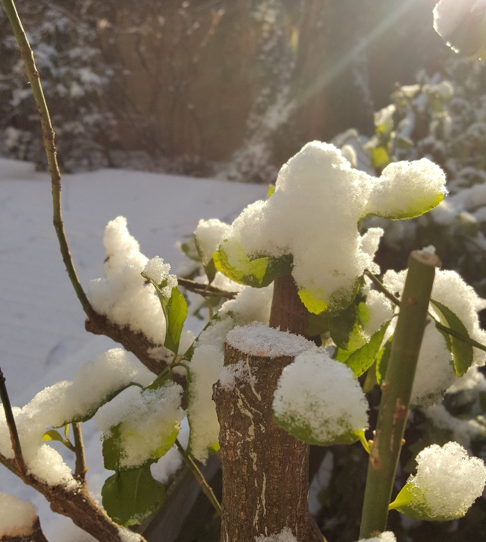 Winter Pruning - The dormant months are a great time to get started…