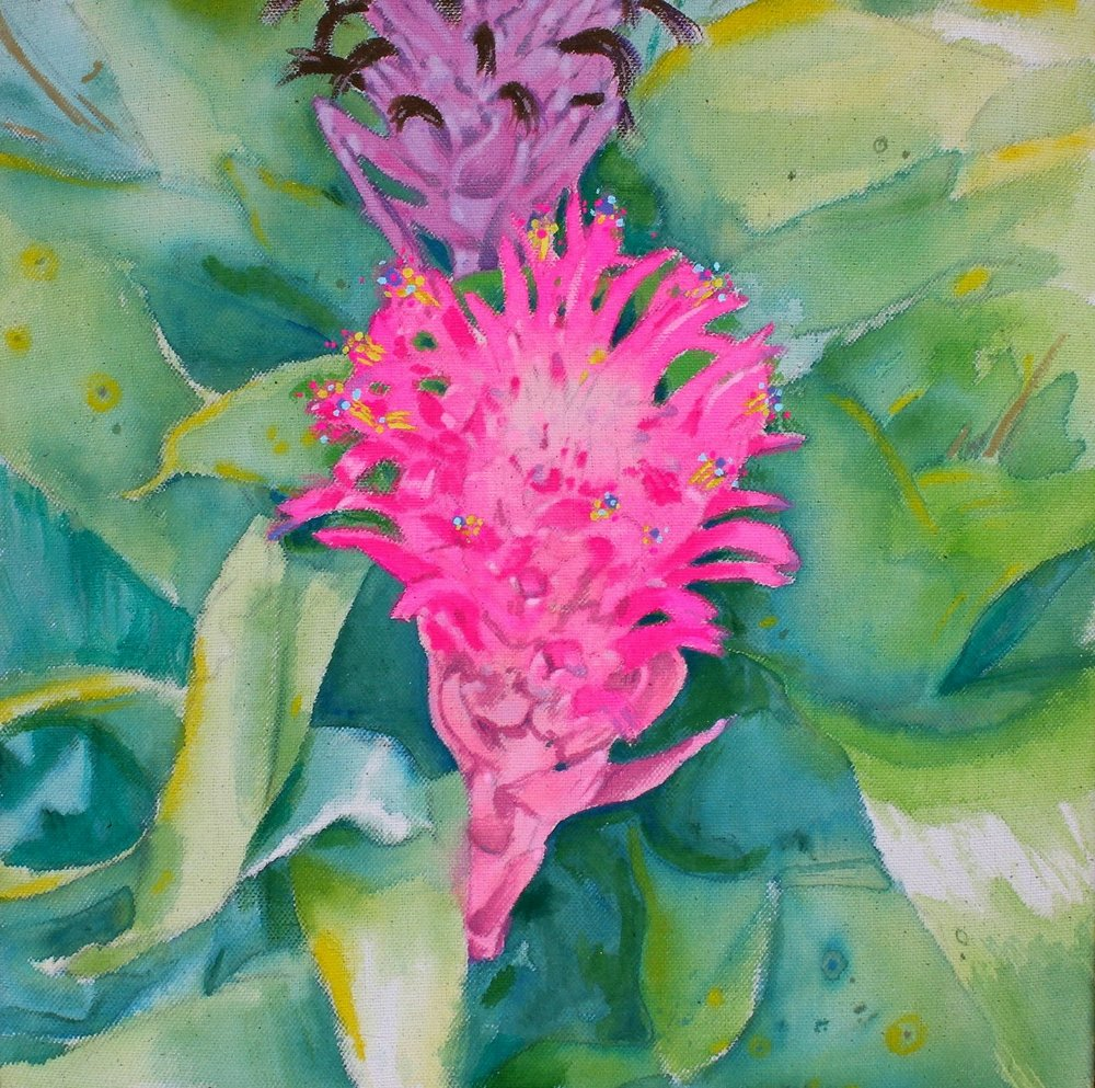 Bromeliads   gouache on raw canvas. Daggerwing Nature Center. 2018