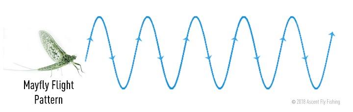 5RTU_mayfly flight pattern.jpg