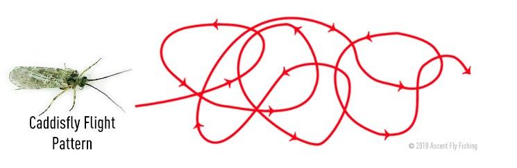 5RTU_caddis flight pattern.jpg