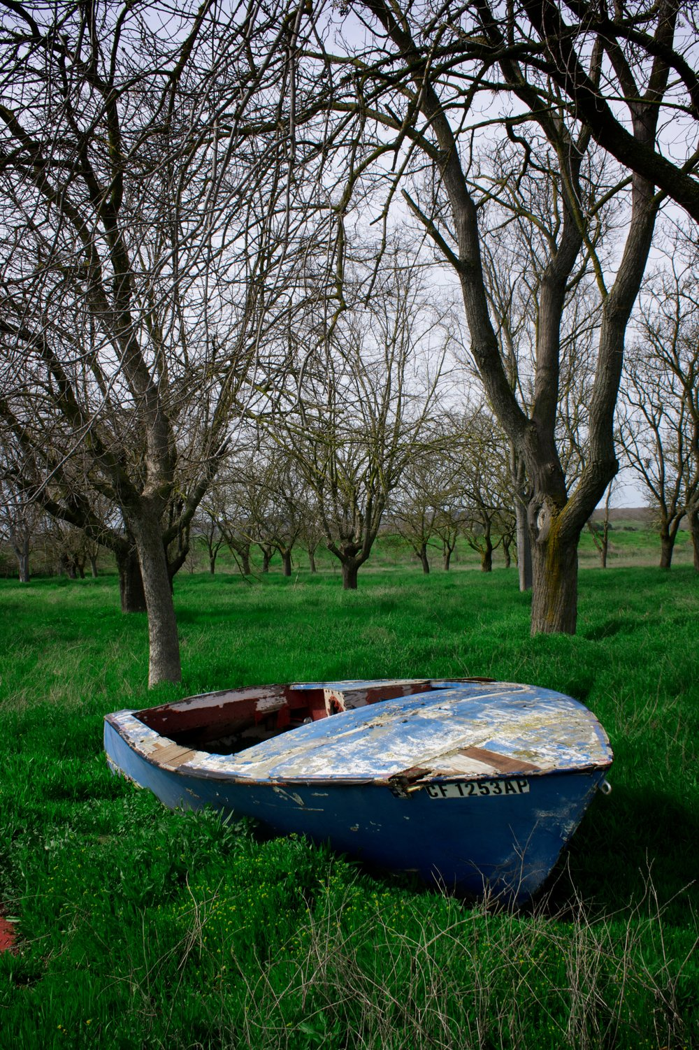 Boat Not Afloat.jpg