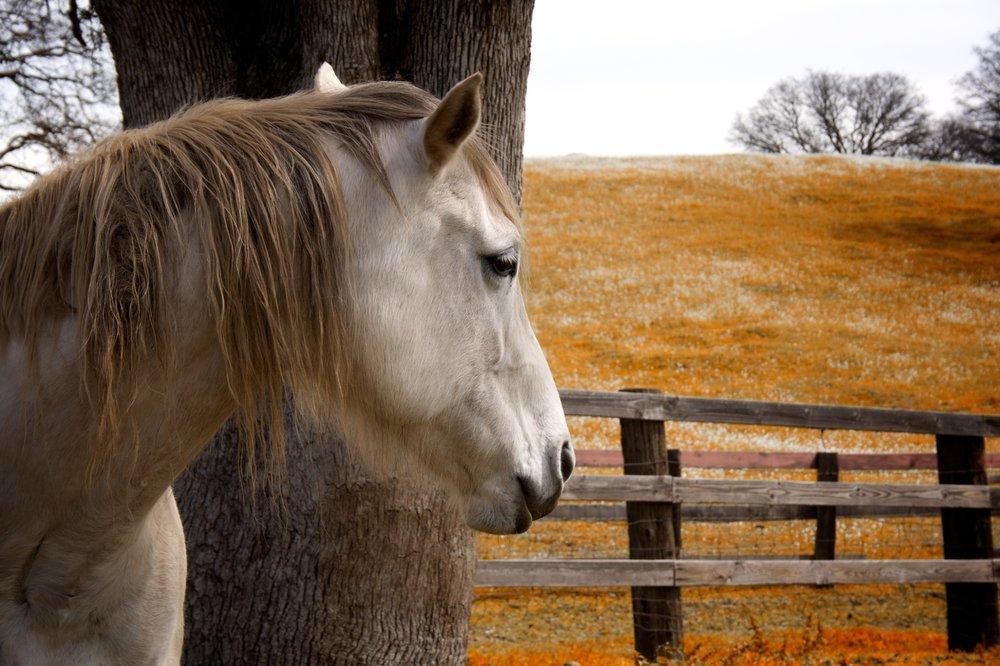 Horse Eats Orange Grass.jpg