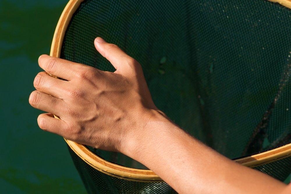 Fish Net.jpg