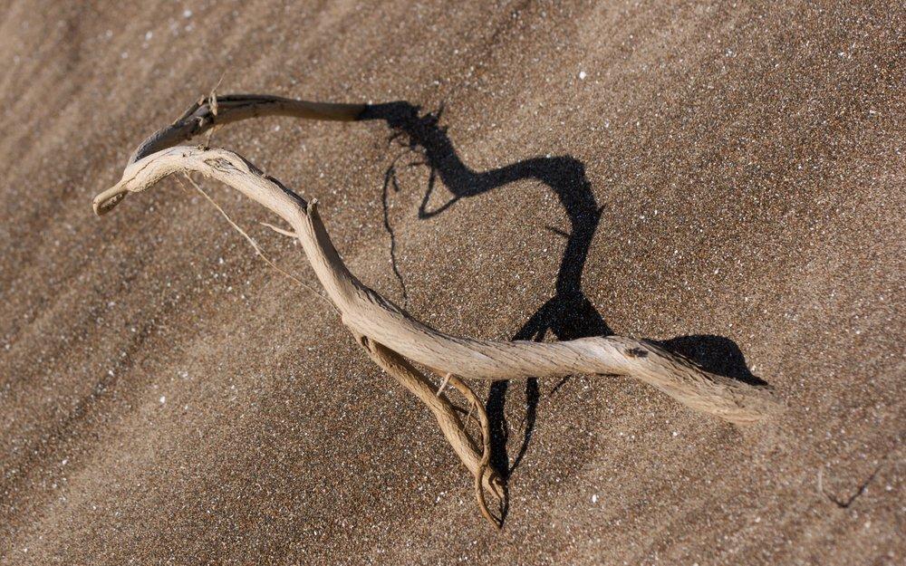Sand Twig.jpg
