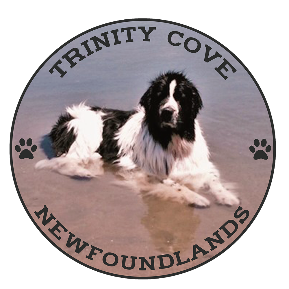 Trinity Cove Newfoundlands