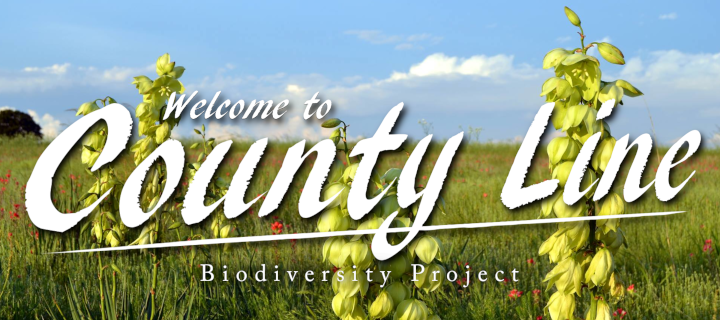 Biodiversity project banner.png
