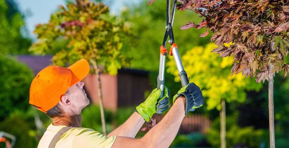 Pruning-and-plant-health-care3-1024x523.jpg