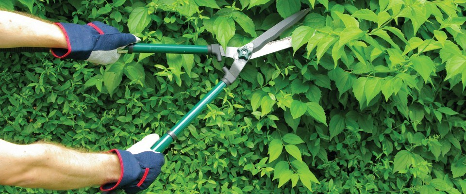Pruning-and-plant-health-care2.jpg