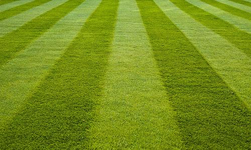 Cut-Grass.jpg