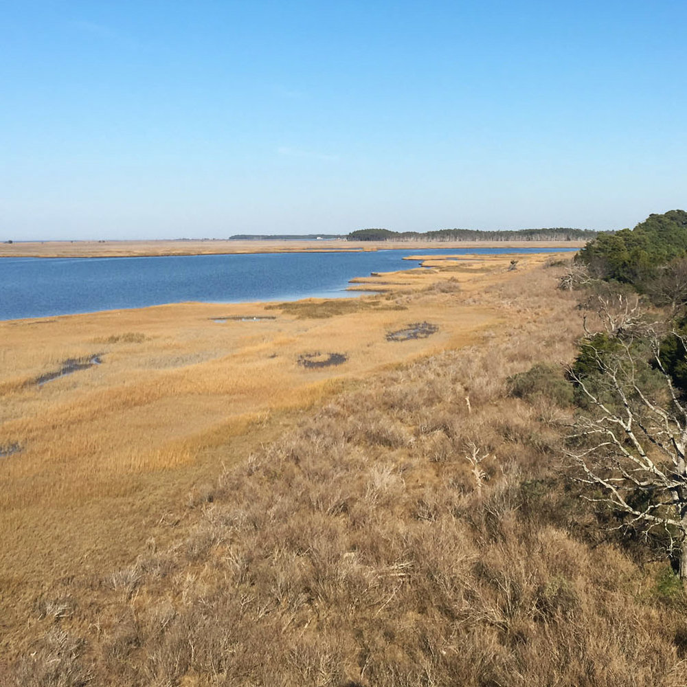 longevity - Natural lands are more resilient. They protect communities and give wildlife and natural systems a chance to adapt to the changes around them. Conservation easements protect natural lands.
