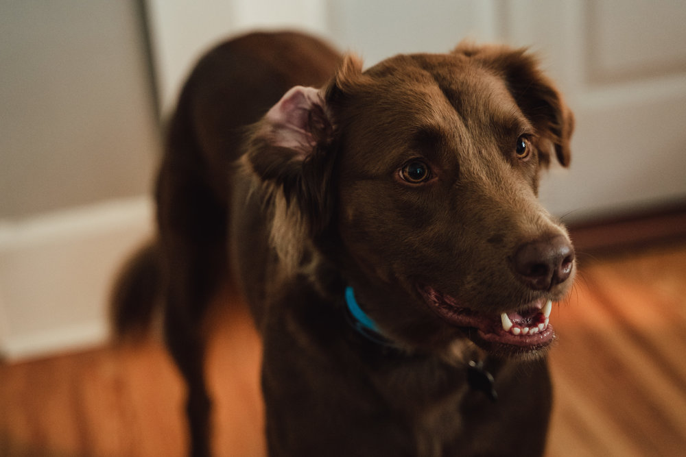 YOUR FURRY HOST: INDY (STEF'S DOG) -