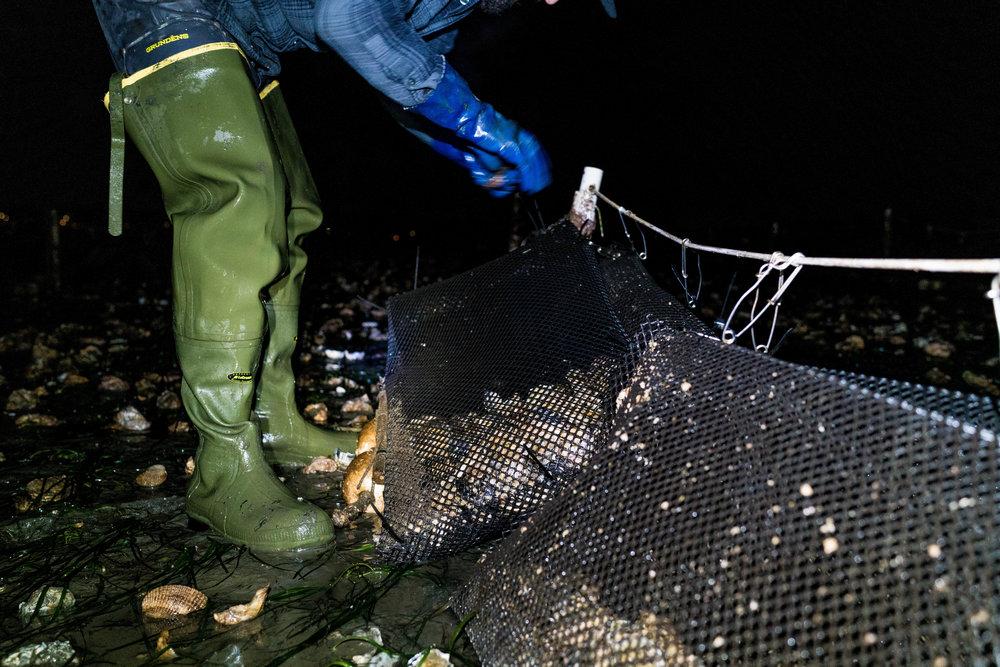 drayton harbor oysters-dylansantosgreen-36.jpg