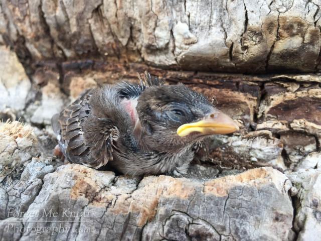 bird rescue IMG_4007