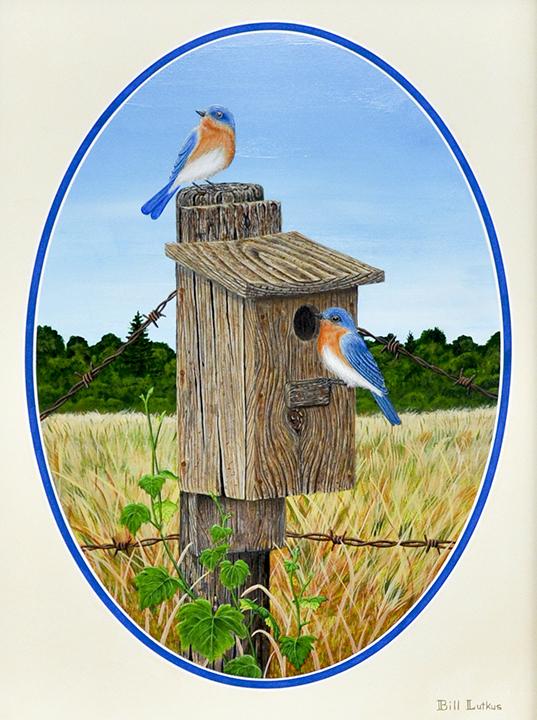 Bluebird House Hunting